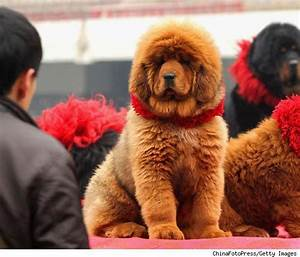 Information Hub Of Besties.: Most Expensive Dog-Red ...
