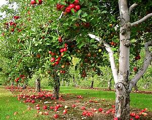 How Much Sunlight Is Needed To Grow Apple Trees