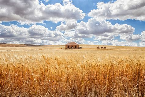 perfect lonely  houses blending  nature