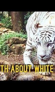 𝑾𝒉𝒊𝒕𝒆 𝑻𝒊𝒈𝒆𝒓 𝑭𝒂𝒄𝒕𝒔 - YouTube in 2020 | Tiger facts, White ...