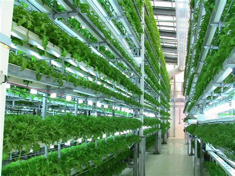 Vertical Vegetable Gardening Systems by Sistem For Aquaponic Aquaponics Vegetables Hydroponics