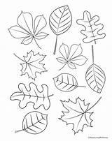 Coloring Fall Pages Preschool Children Leaves Leaf Really Printable Young Kindergarten Different Trees Tree Designs Sheets Autumn Instant Sheet Printables sketch template
