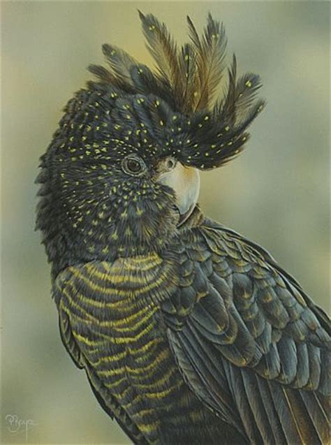 female red tail black cockatoo painting art  peta boyce