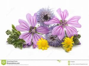 Wild Flowers Stock Photos - Image: 31969653