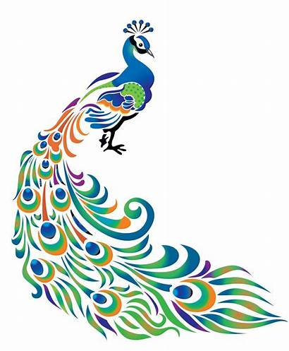 Feather Peacock Drawing Simple Clipart Border Colorful