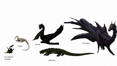 Dragons Lotr Earth Tolkien Middle Comparison Draghi