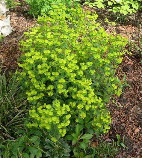 greenzone landscape design  favorite hardy perennial