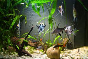 quel neon choisir pour aquarium neon aquarium conseils pour choisir n 233 on d aquarium