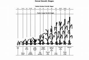 Oat Plant Growth Stages Gallery