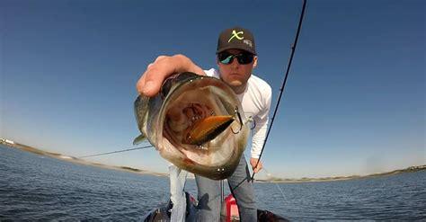 types  crankbaits  catch fish  custom fisherman