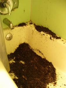 20 weird creepy and nasty things people have come across for Where do ants come from in the bathroom