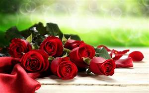 Red Roses Valentines Day background wallpaper   holidays ...