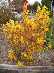 10 Shrubs and Vines for Fall Color  Fall