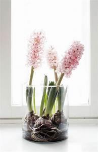 Tulpen Im Glas Ohne Erde : fr hlingsblumen im haus oder im garten bringen mehr lebensfreude fr hlingsblumen blumendeko ~ Frokenaadalensverden.com Haus und Dekorationen