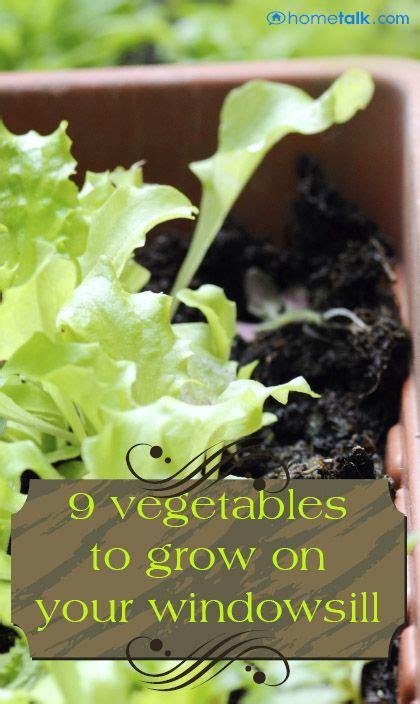 Window Sill Garden Vegetables by 9 Vegetables For Your Windowsill Hometalk Gardening