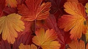 beautiful, autumn, leaves