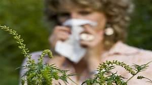 Pflanze Mit Z : ambrosia pflanze mit weltweit st rkstem pollenallergen b ~ Lizthompson.info Haus und Dekorationen