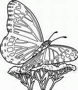 Coloring Pages Printable Butterfly Butterflies sketch template