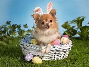 Happy Easter! | inotternews.com