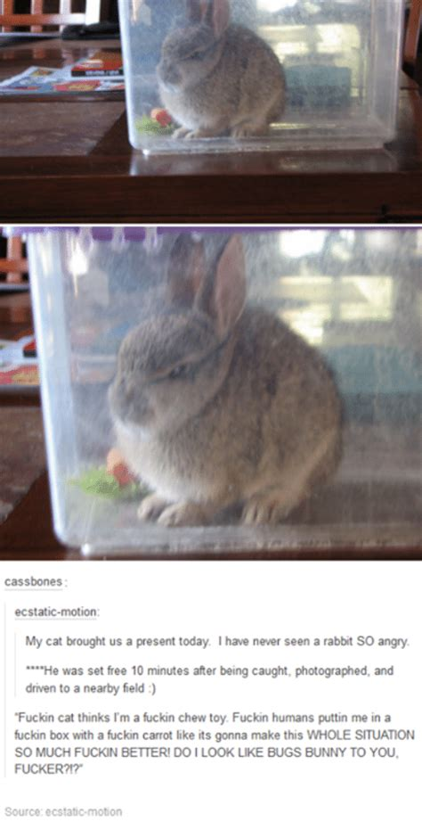 Angry Bunny Meme - 25 best memes about bugs bunny bugs bunny memes