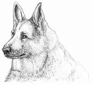 Zeichnen Lernen Mit Bleistift : einen hund malen und zeichnen ~ Frokenaadalensverden.com Haus und Dekorationen