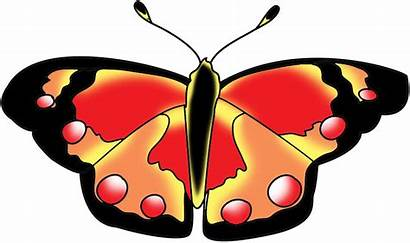 Butterfly Orange Clipart Clip Cliparts Moth Graphic