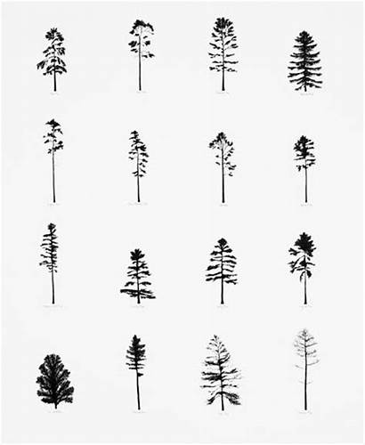 Tree Pine Drawing Tattoo Trees Tattoos Stick