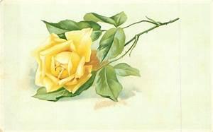 single yellow rose stalk to right - TuckDB