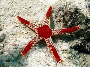 Best Wallpapers: Starfish Wallpapers