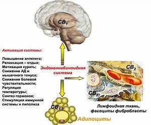 Рациональная схема лечения гипертонии