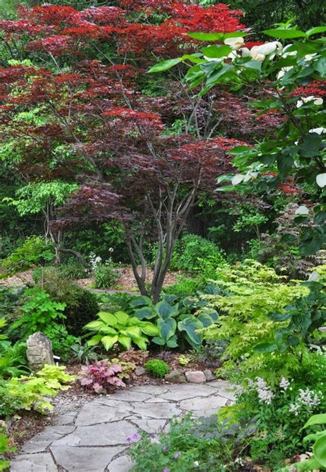 Best 25+ Japanese Maple Garden Ideas On Pinterest