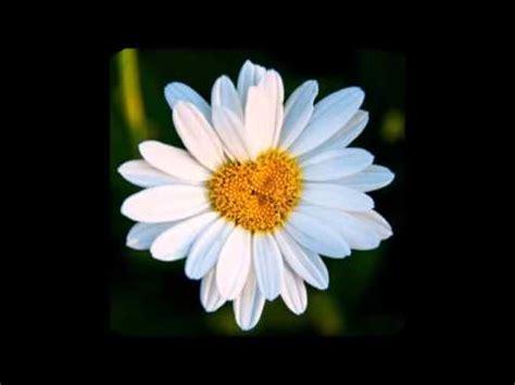 canzone ci vuole un fiore ci vuole un fiore canzoni per bambini doovi