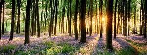 Fototapete Wald Frische Meditative Stimmung Fr Zuhause
