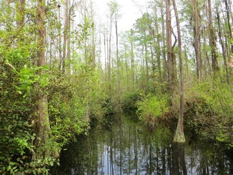Sw Boat Tours Georgia by Okefenokee Sw Park Gita In Barca Picture Of