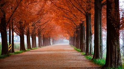 Scenery Autumn Park 5k Wallpapers