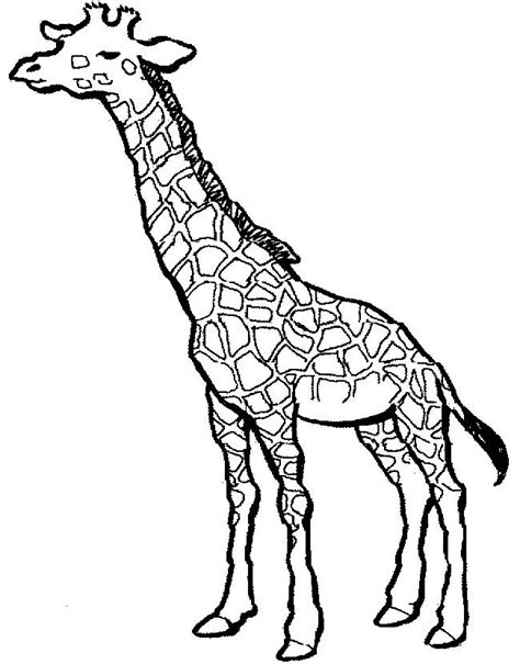 simple giraffe outline   paint  picture giraffe  giraffe coloring pages