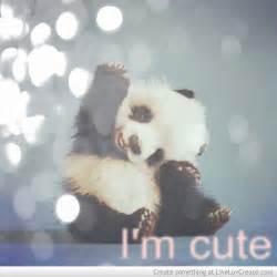 Bear Bed Set by Cute Panda Love Pretty Quotes Image 585747 On Favim Com