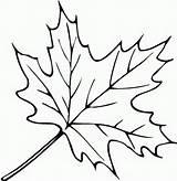 Coloring Leaves Fall Printable Preschool sketch template