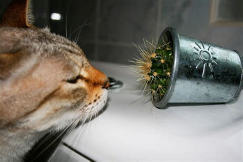 Cats Loves Cactus