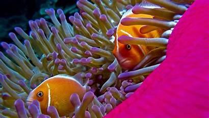 Fish Ocean Underwater Wallpapers Fishes Sea Water