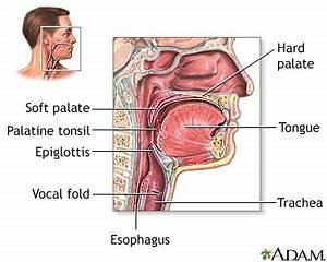 Throat anatomy: MedlinePlus Medical Encyclopedia Image