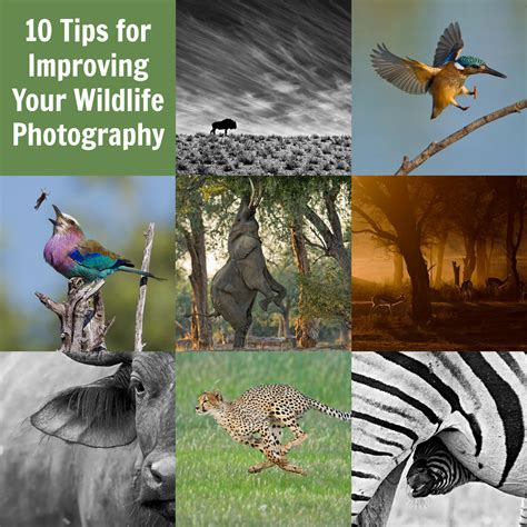 tips  improving  wildlife photography