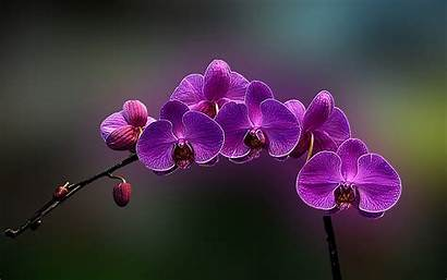 Orchid Flower Weneedfun Desktop Orchids Flowers Background