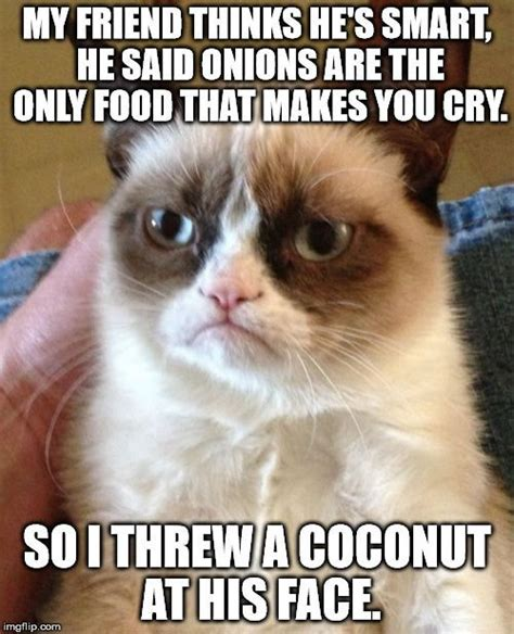 Make A Grumpy Cat Meme - 1358 best grumpy cat images on pinterest grumpy cat grumpy kitty and cats