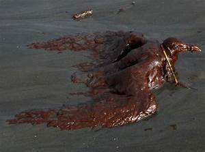 The BP Oil Leak Disaster: Animals Are the First Victims ...