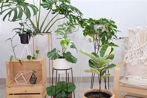 shop tanaman hits instagram womantalk