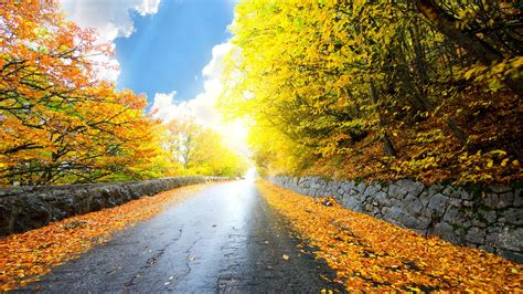 Gold Autumn Wallpapers by Hd 1080p Nature Wallpapers Free