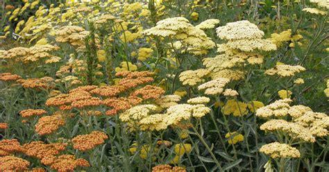 Garten Gestalten Trockener Boden wildstauden f 252 r trockenen boden mein sch 246 ner garten