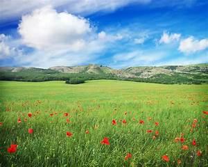 Wiese Mit Blumen : gr ne wiese mit blumen und bew lktem blauem himmel im berg ~ Watch28wear.com Haus und Dekorationen