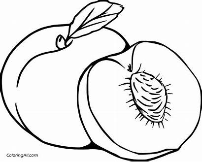 Peach Coloring Half Peaches Fruits Coloringall Svg